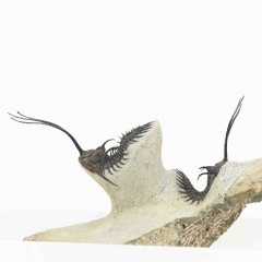 Walliserops trifurcatus