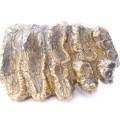 Stegodon trigonocephalus