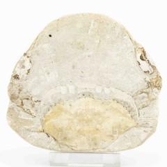Portunus monspeliensis
