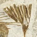 Selenopeltis buchii and crinoid