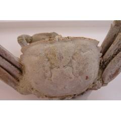 Macrophthalmus (Macrophthalmus) grandidieri